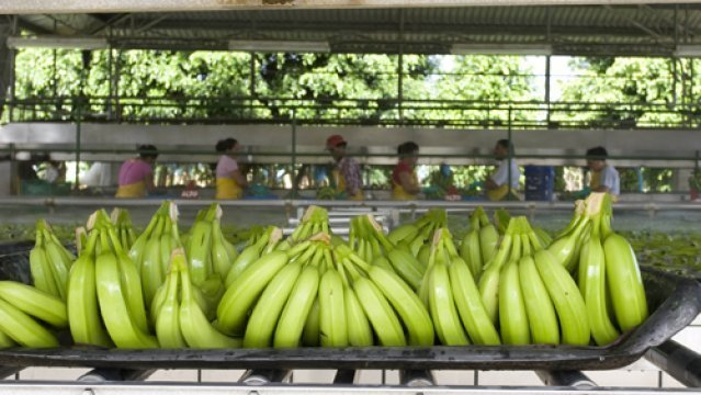 Last year --according the oficiales-- figures banana foreign sales totaled US $ 8.7 million.