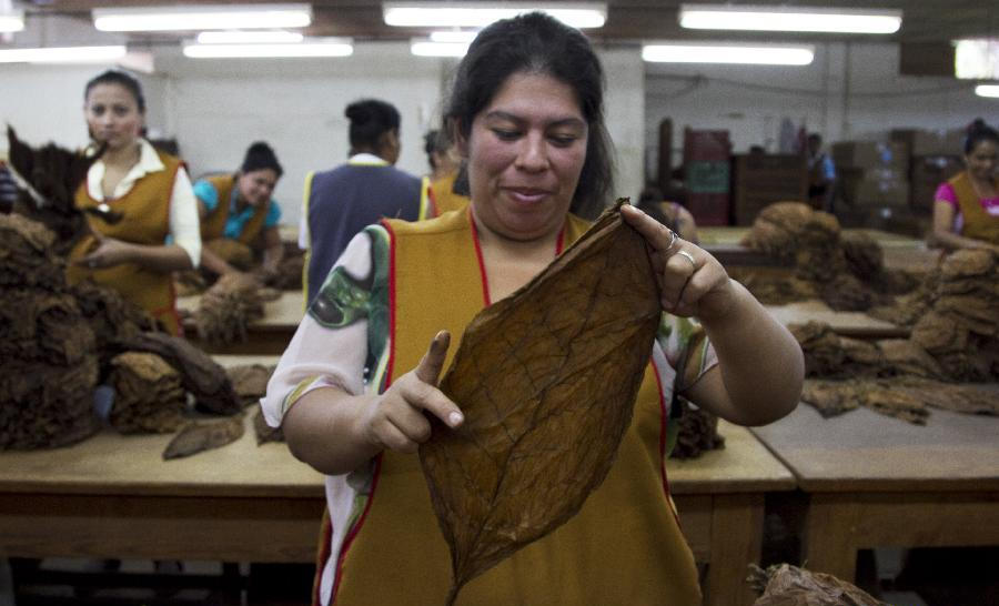 A woman prepares tobacco leaves at a cigar factory in Esteli, 140 km north of Managua