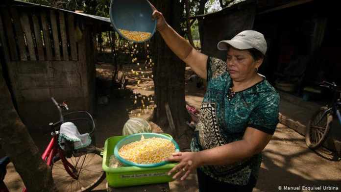 Farmers in Nicaragua living in uncertainty