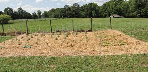 Vegetable garden after weed-proofing with paper and straw