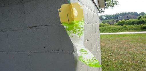 Japanese Beetle trap hanging from house