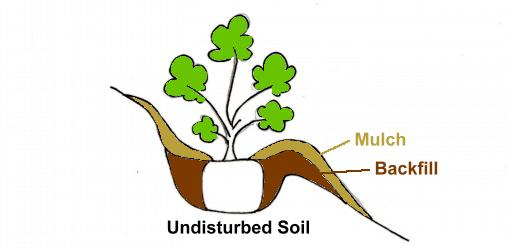 Drawing of how to plant  a tree or shrub on a slope