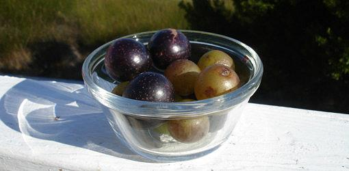 Muscadine and scuppernong grapes in a bowl