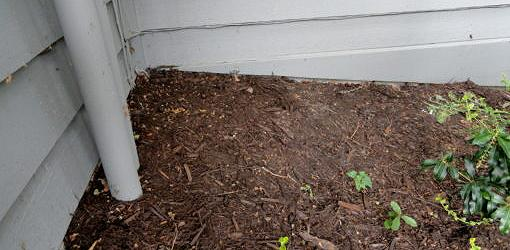 Wood mulch piled up next to house