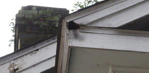 Squirrel hole in eave fascia board.