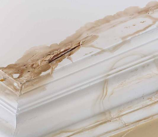 Ceiling with water stains just above the crown molding