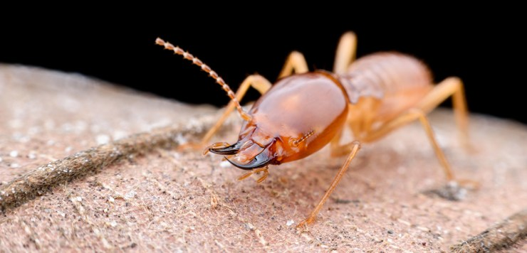Termite Control in King of Prussia, PA