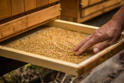 Benefits of Bee Pollen: What Experts Need You to Know