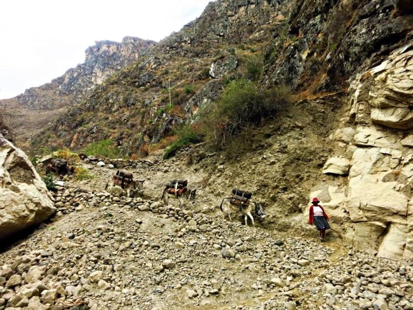 Santa Cruz Trek Peru Esel