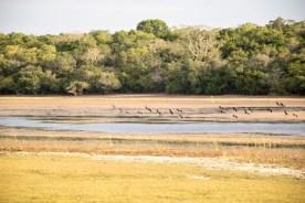 sri_lanka_wilpattu-safari