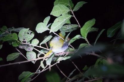 Vögel lassen sich bei einer Nachtwanderung beim Schlafen nicht stören.