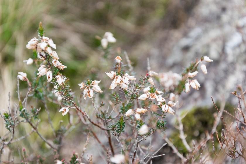 Flowers Wales