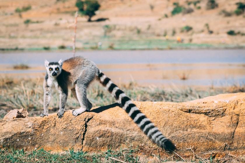 lemuren madagaskar urlaub reise tipps