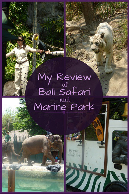 review bali safari and marine park