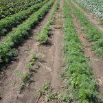 Garden Patch Farms