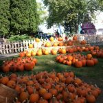 Harvest Fest at Santa's Village AZoosment Park