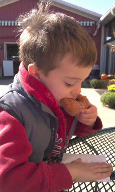 Royal Oak Farm - Cooper eating donut - Toddling Around Chicagoland