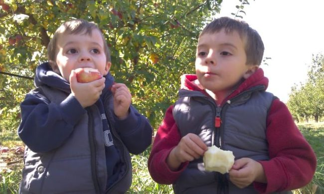 Royal Oak Farm - boys eating apples - Toddling Around Chicagoland