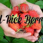 Chicago Area Berry Picking Guide – 2014