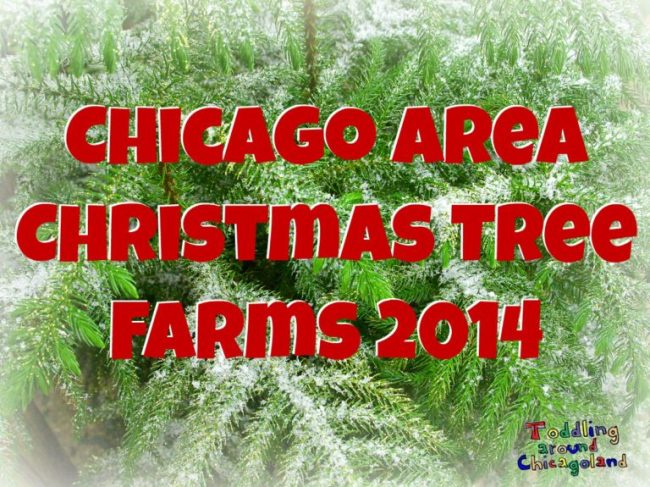 Chicago Area Christmas Tree Farms 2014