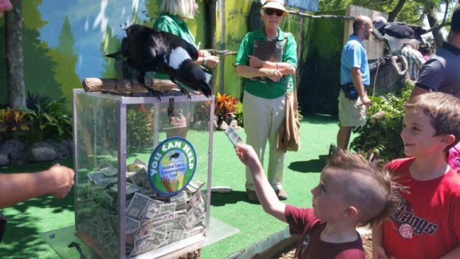 Brookfield Zoo Festival of Flight - donation