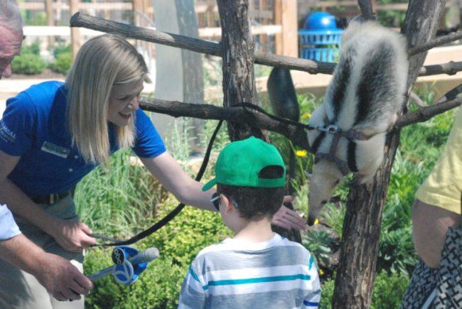 Wild Encounters at Brookfield Zoo - animal ambassador