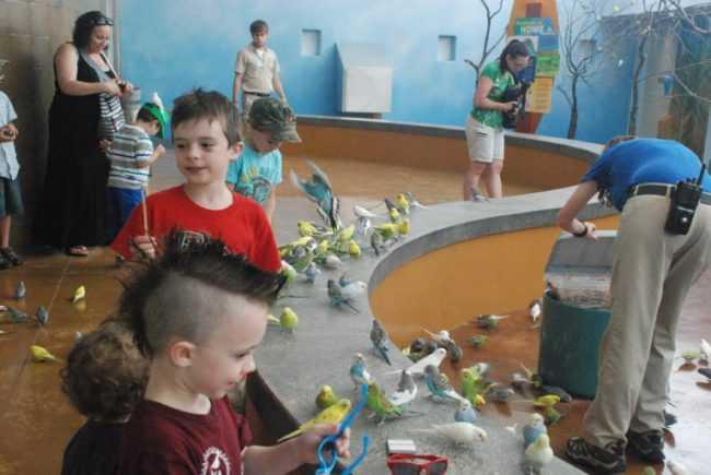 Wild Encounters at Brookfield Zoo - parakeet aviary