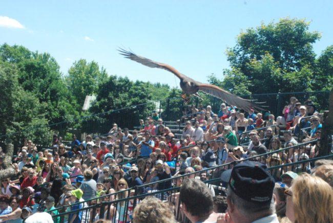 Brookfield Zoo Festival of Flight - bird flying