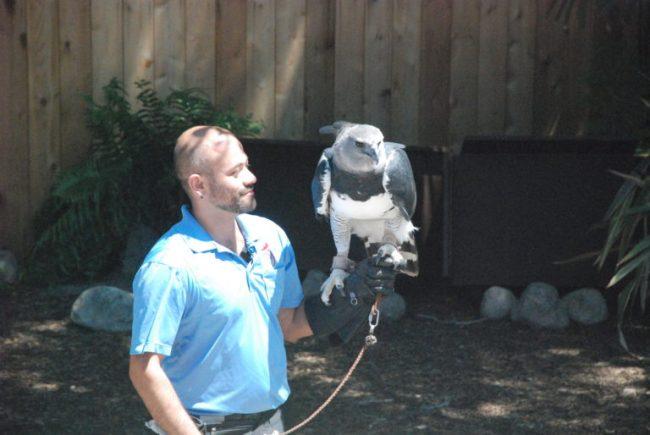 Brookfield Zoo Festival of Flight - bird and handler