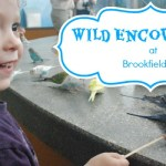 Wild Encounters at Brookfield Zoo