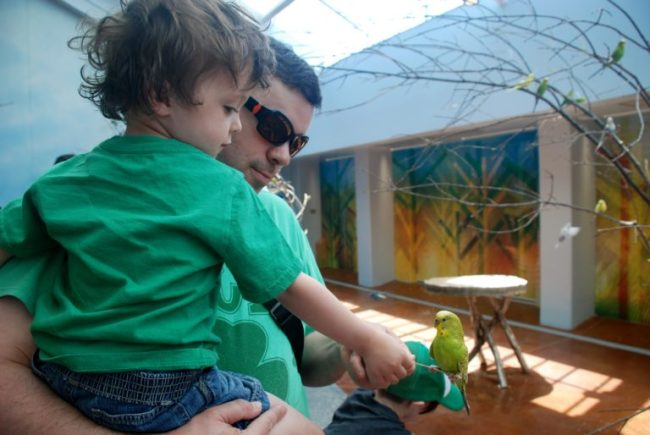Chicago City Guide sponsored by Chicco #ChiccoKidsCityGuide [ad] - parakeets at Brookfield Zoo