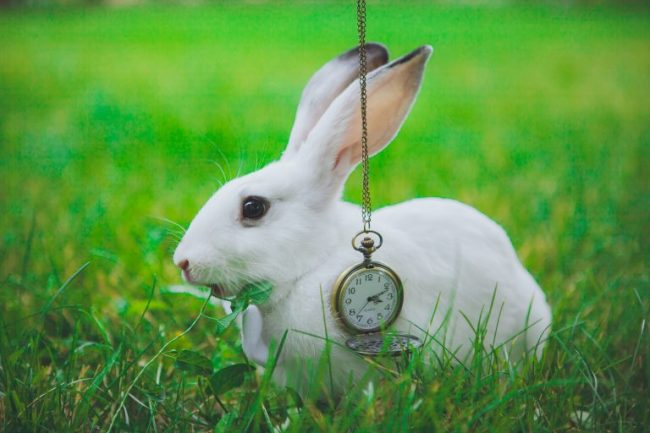Rabbit with a watch - Alice in Wonderland