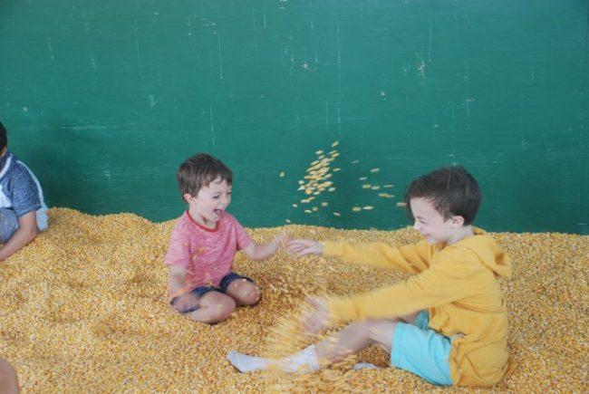 Corn Box at All Seasons Apple Orchard