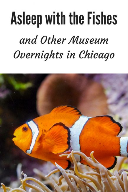 Fish - Museum Overnights in Chicago