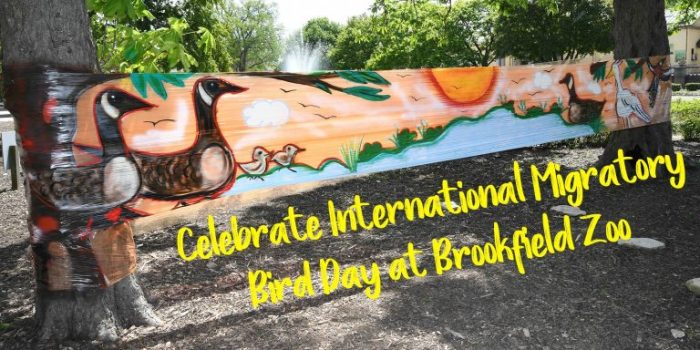 International Migratory Bird Day at Brookfield Zoo