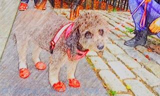 Dog shoes - New York dogs