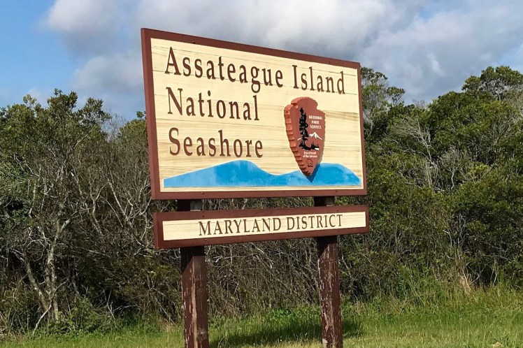 Assateague Island Beaches Near West Ocean City, MD Things to do in Ocean City MD Toddling Traveler