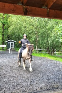 Icelandic horses Golden Circle Tour 3 Days in Iceland Toddling Traveler