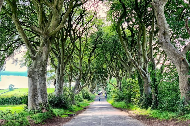 Dark Hedges Game of Thrones Northern Ireland road trip Toddling Traveler