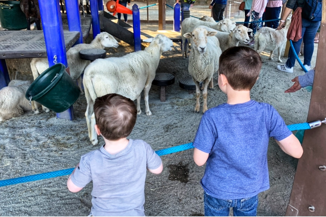 Animal Kingdom Petting Zoo Things to do with Toddlers at Animal Kingdom