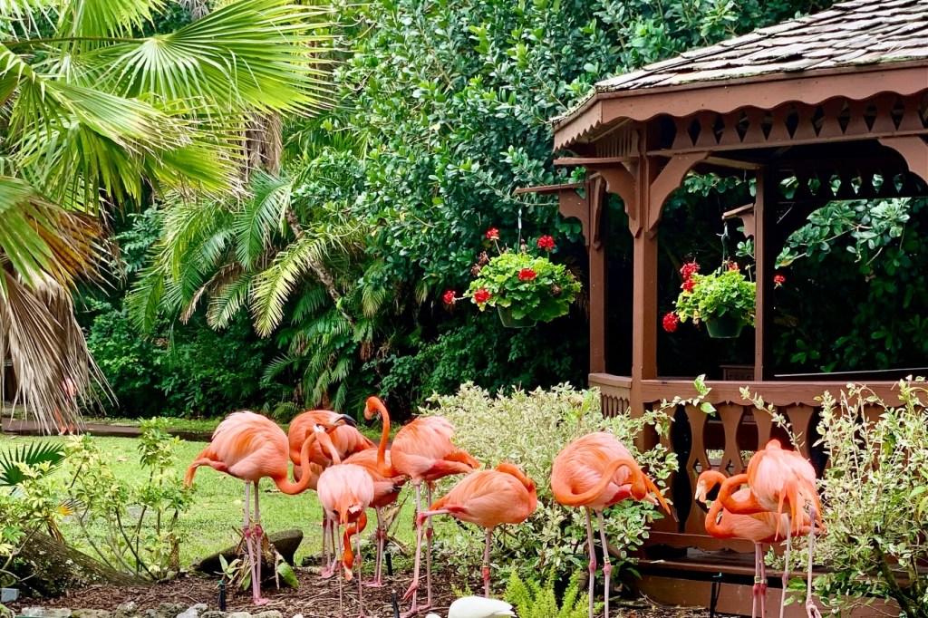 Sarasota Jungle Gardens Toddling Traveler