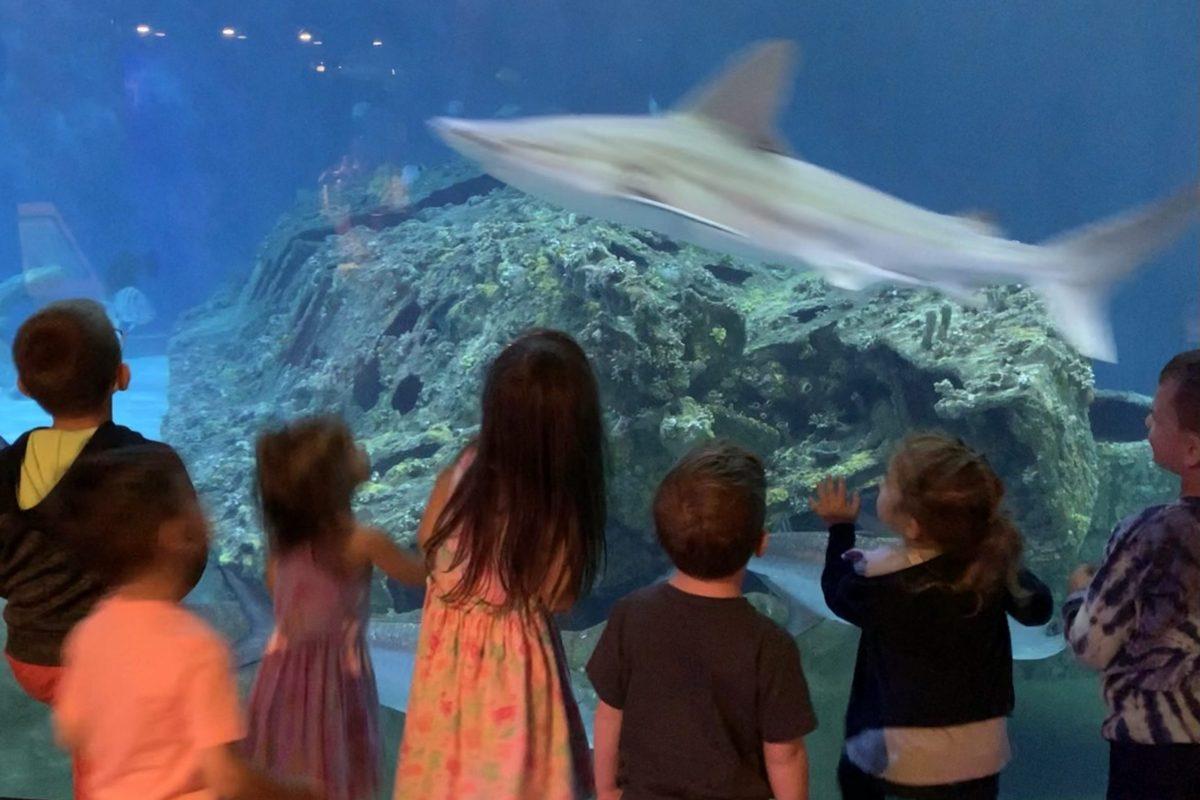 Sharks at NC Aquarium OBX Things to Do