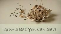 organic seeds