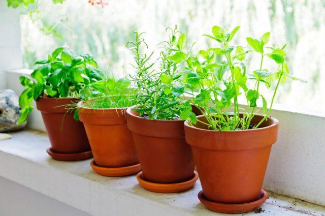 grow healthy plants