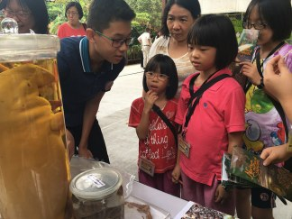 Families were awed by our rich local marine biodiversity. Photo by Joelle Lai.