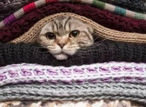 Que tu gato no tirite de frío