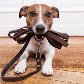 consejos-para-el-adiestramiento-canino