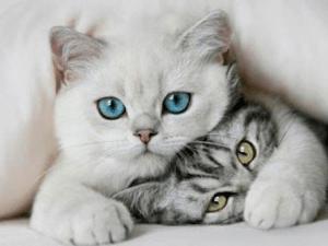 Gatos, también deben alimentarse sanamente