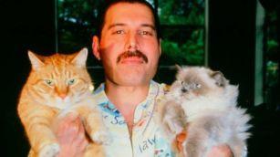 Freddie Mercury con sus gatos
