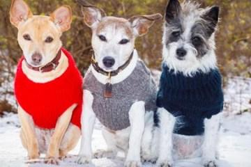 Protege a tu perro este invierno